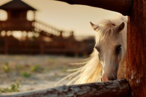 Equine Assisted Psychotherapy